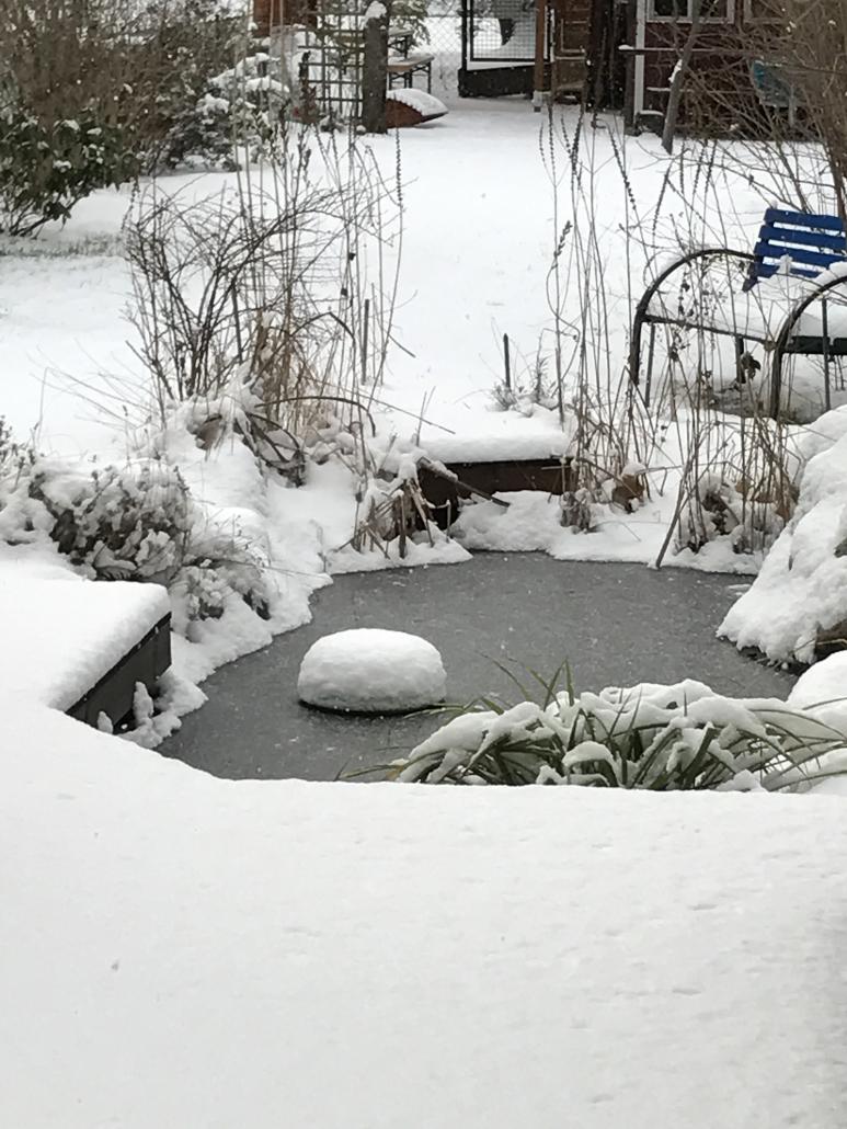 Garten mit Teich Wohnung Berlin